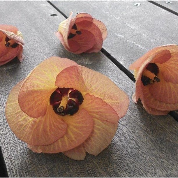 Malvenblüten Quadrat - Anja Muckle Ergotherapie Sankt Georgen