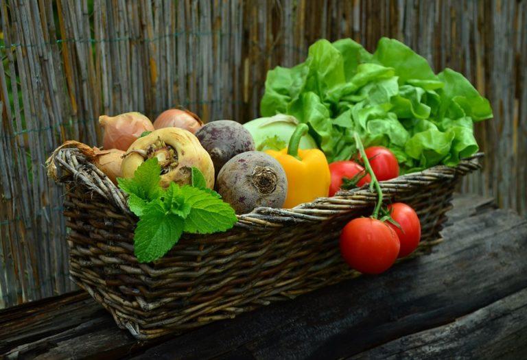 vegetables 752153 960 720 768x525 - 22.-24.02.19 basefood Wochenend-Kompaktkurs